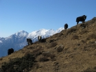 Gokyo Valley Explorer Trek